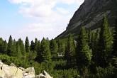 limbový háj - Malá Studená dolina