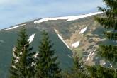 borovica horská - pôdoochranné a protilavínové zalesňovanie (do šachovnice - Západné Tatry)
