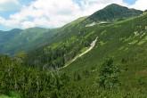 pásmo lesa, kosodreviny a alpínskych lúk (záver Kôprovej doliny - Liptovské kopy)