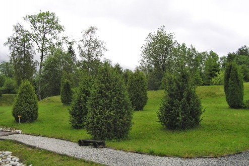 borievka obačajná - rôzne vzrastové a tvarové formy (Botanická záhrada TANAPu v Tatranskej Lomnici)