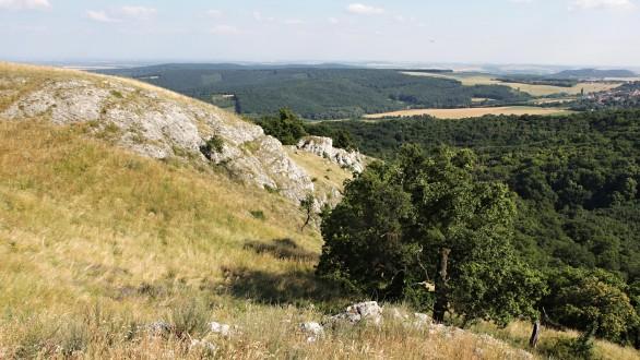 dub plstnatý - v prostredí lesostepi (CHKO Pálava)