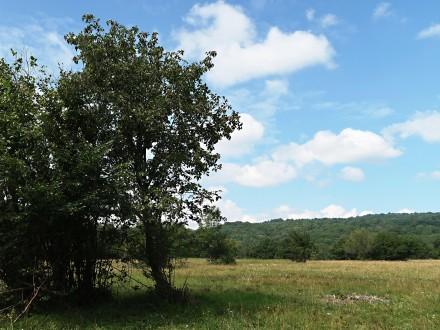jarabina brekyňová v prostredí Zádielskej planiny