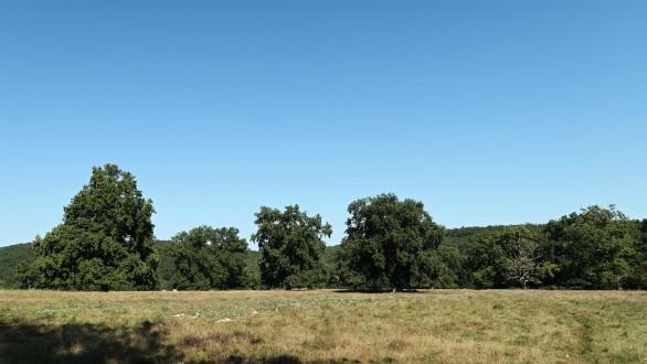 dub sivý ako krajinotvorný prvok (Cibajky - Ponitrie)