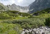 vŕba švajčiarska okolo horskej bystriny