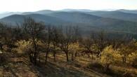 drieň obyčajný - drieňová dúbrava (Corneto‑Quercetum) - Chotenovec, Tribeč (foto: Ina 4/2021)