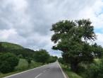 hruška planá (pri štátnej ceste medzi obcami Abramová a Ondrašová, 6/2021)