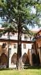 ginko dvojlaločné (Dominikánsky kláštor v Českých Budějoviciach) )