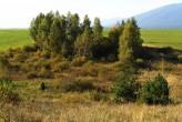 breza previsnutá - ako jedna z prvých obsadzuje uvolnené nevyužívané plochy
