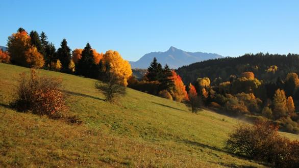 jeseň a osika