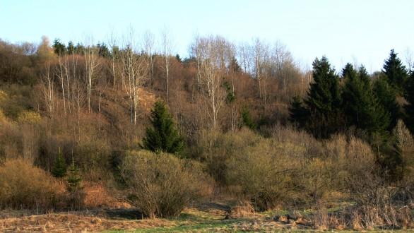 topoľ osikový spolu s ostatnými náletovými drevinami (vŕby, brezy) na nevyužívaných pasienkoch