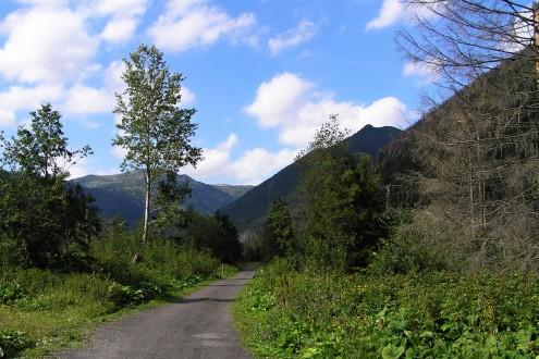 topoľ osikový - Vysoké Tatry (Tichá dolina)
