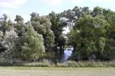 vŕba biela, ako súčasť lužných lesov pri Dunaji spolu s topoľom bielym